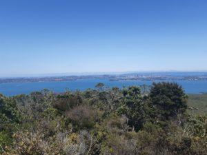 ニュージーランドのオークランドの街が見えるランギトトアイランド